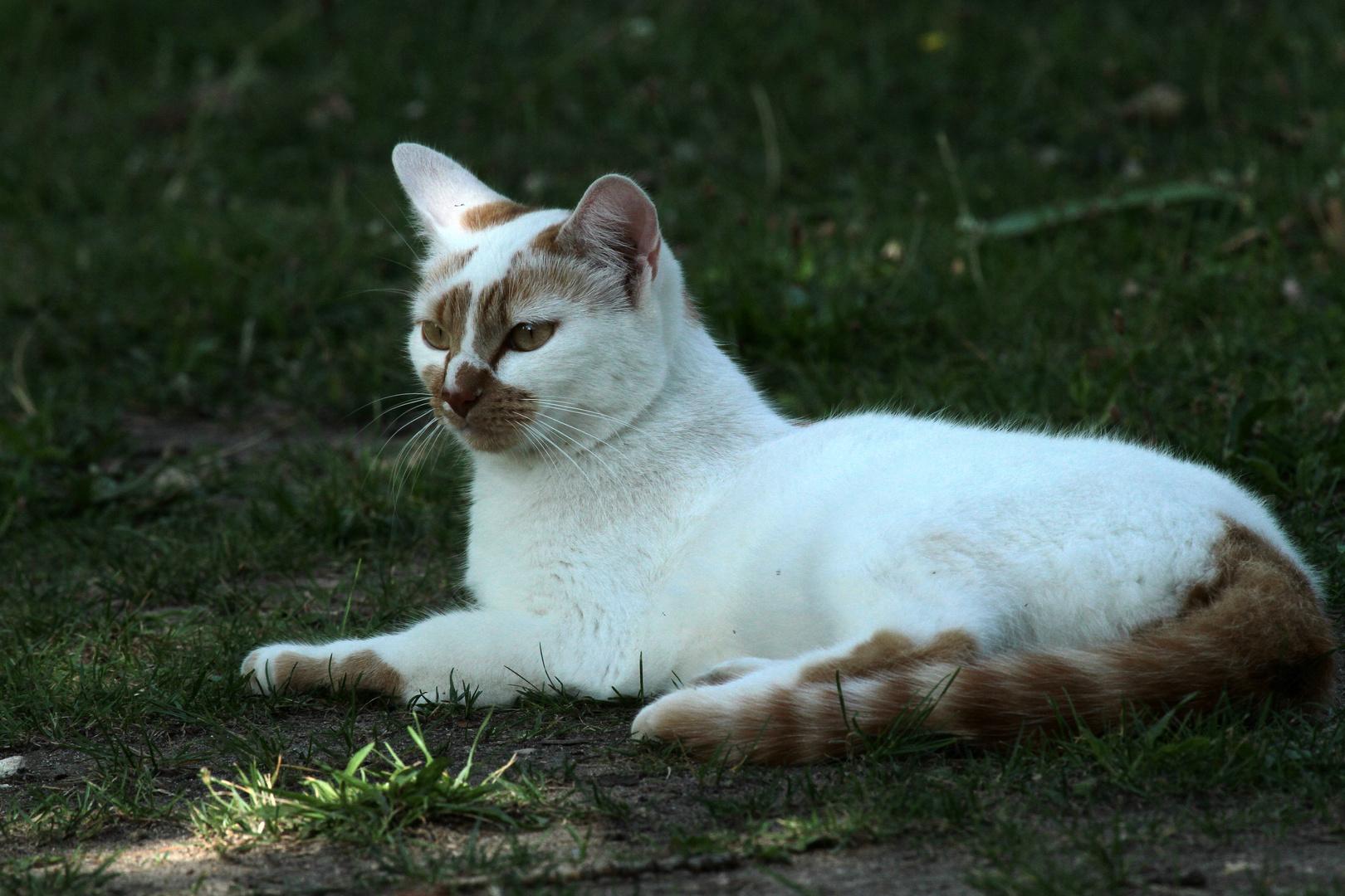 le chat reveur