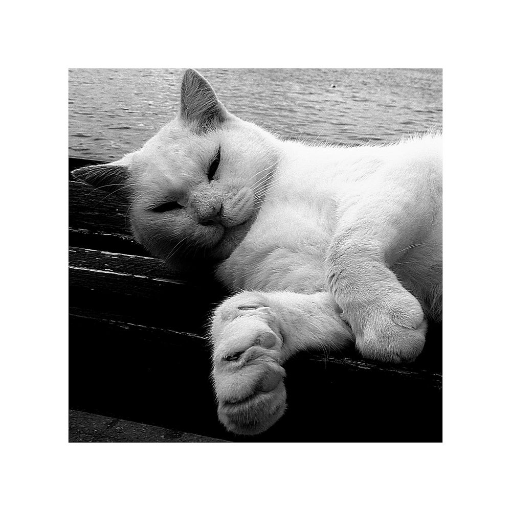 """Le chat s""""éveille"""