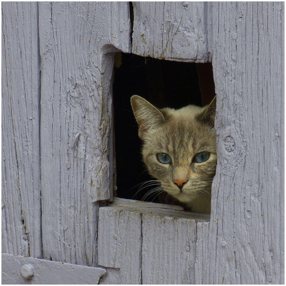 le chat timide Foto & Bild | tiere, haustiere, katzen