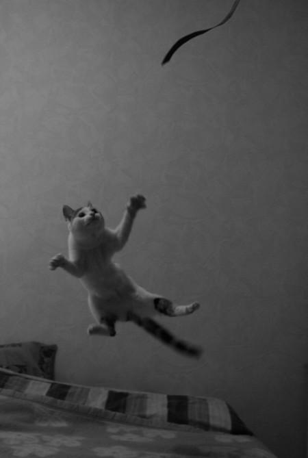 Le chat volant