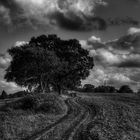 Le chemin (1)