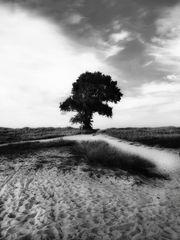 Le chemin (12)
