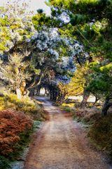 Le chemin (23) ..... randonnée hivernale