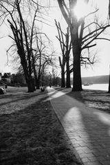 Le chemin (35) ...... cela mène le long du Rhin vers Unkel!