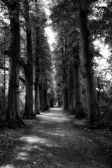 Le chemin (7)