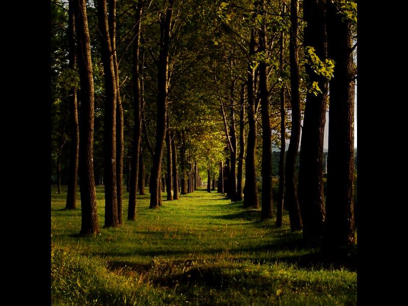 Le chemin de l'automne