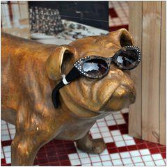 Le chien de Fontainebleau