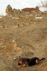 Le chien du cimetière .....