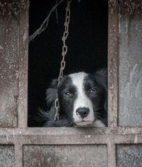 Le chien triste