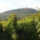 Le château du Haut-Koenigsbourg vu du vignoble alsacien