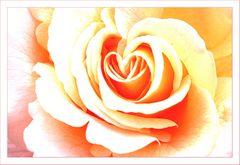 Le coeur de la rose