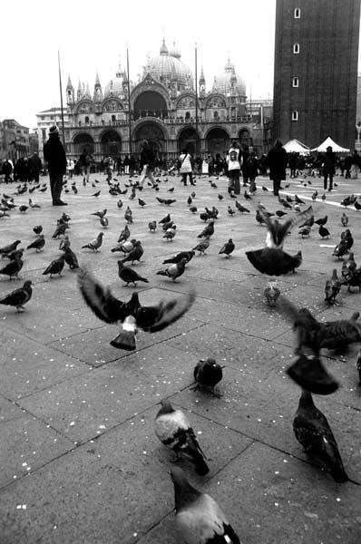 Le colombe di San Marco