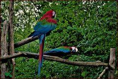le couple du zoo