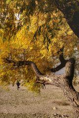 Le début de l'automne ou l'eau manquante
