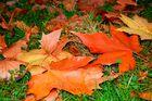 Le dernier automne