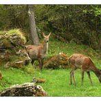 Le discrete abitanti del bosco: