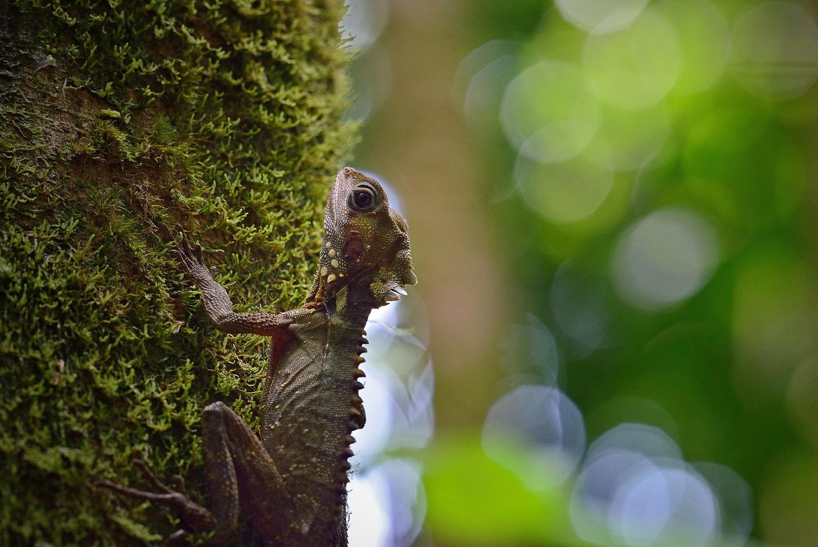 Le dragon de la forêt