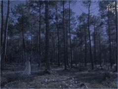 Le fantôme de la forêt des Landes