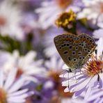 Le farfalle di Nonna Rosina