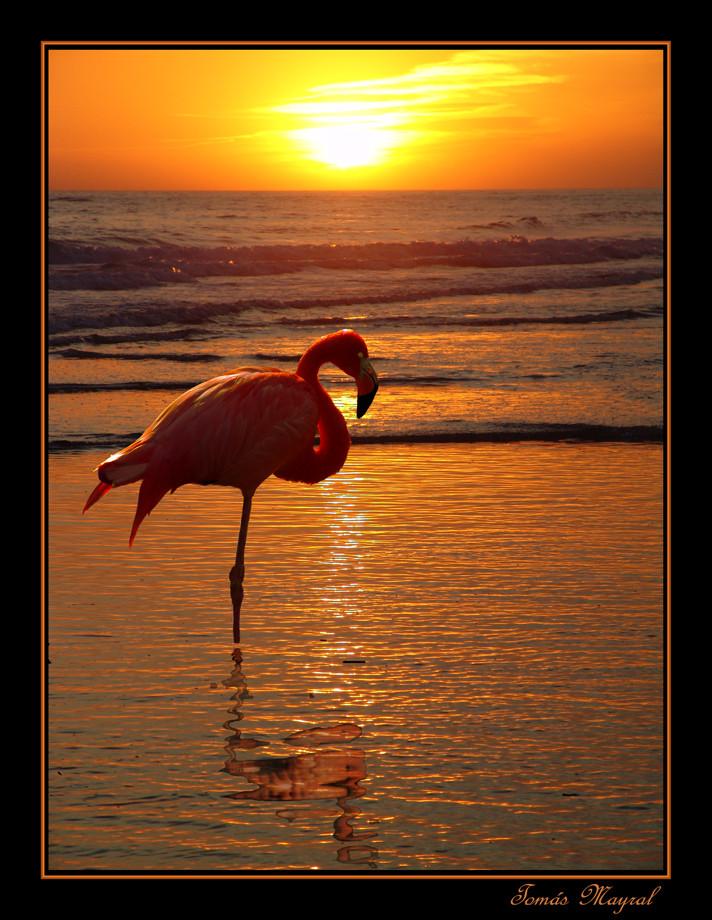 Le Flamenco a la tombeè du jour