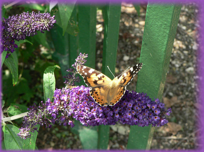 le fleur et le papillon