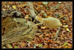 Le fumeur de champignons