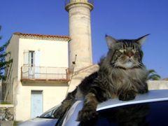 Le gardien de voiture ...