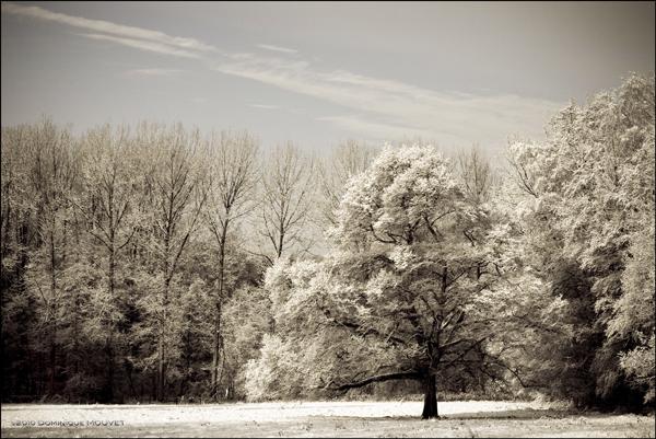 le grand arbre dans la prairie...