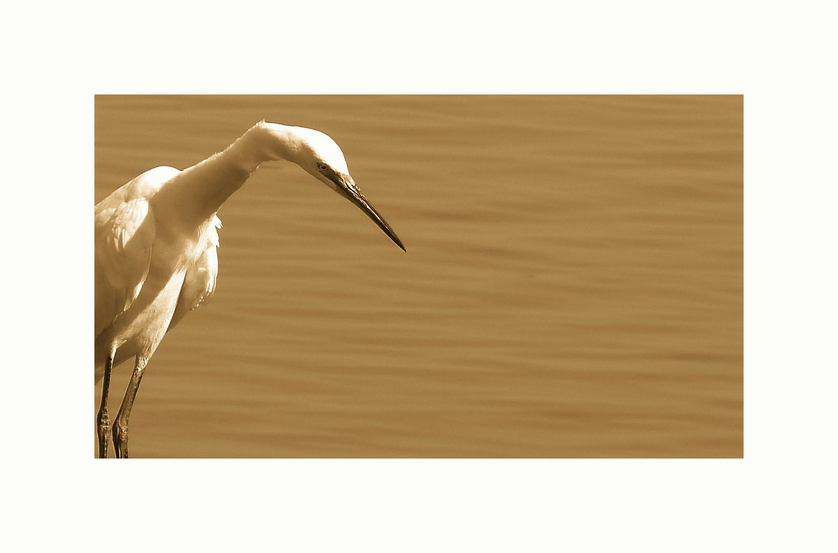 Le heron