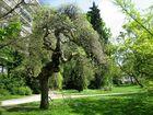 Le jardin botanique 29
