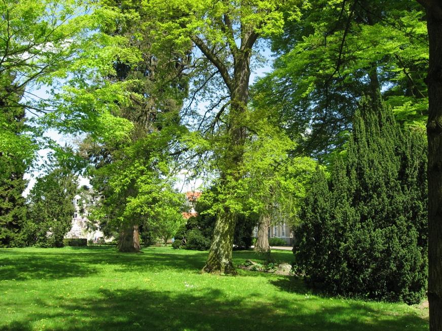 Le jardin botanique 41