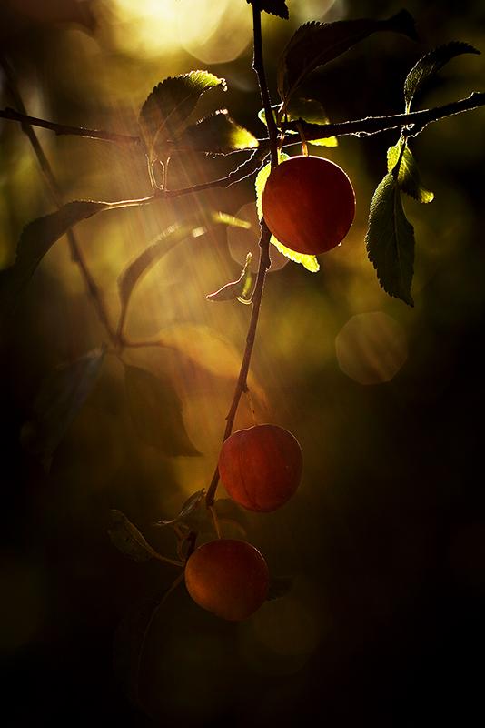 le Jardin d'Eden..