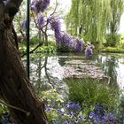 Le jardin exotique de Monet