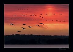 Le jour se lève sur le Lac de Der