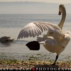 Le Lac des Cygnes ~ Karim SAARI ©