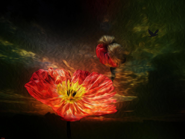 le langage du jour et de la nuit photo et image emotions