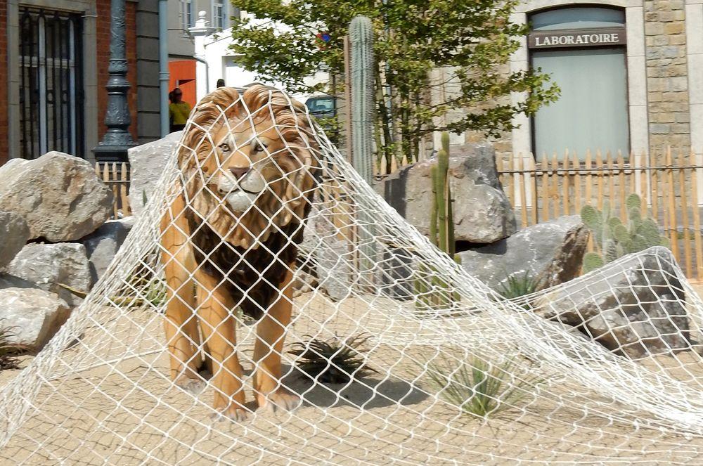 Le Lion de la fable photo et image   animaux, animaux ...