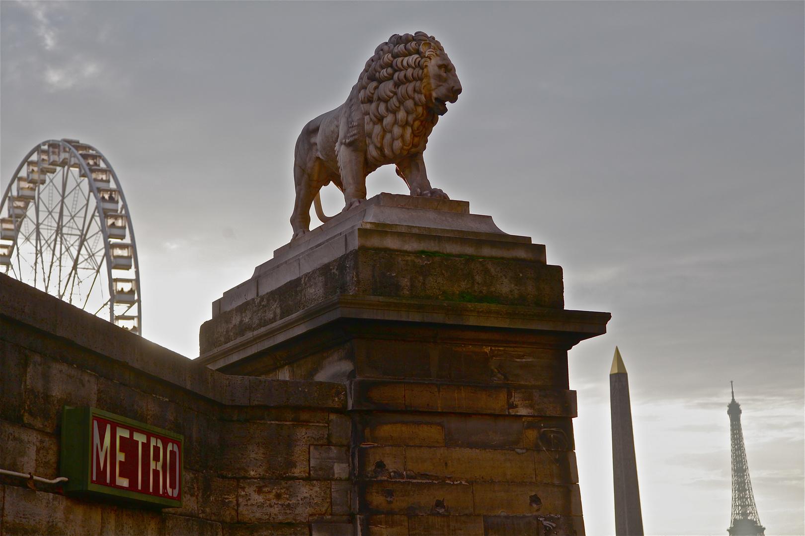 le lion fait la roue!