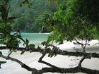 le mangrovie