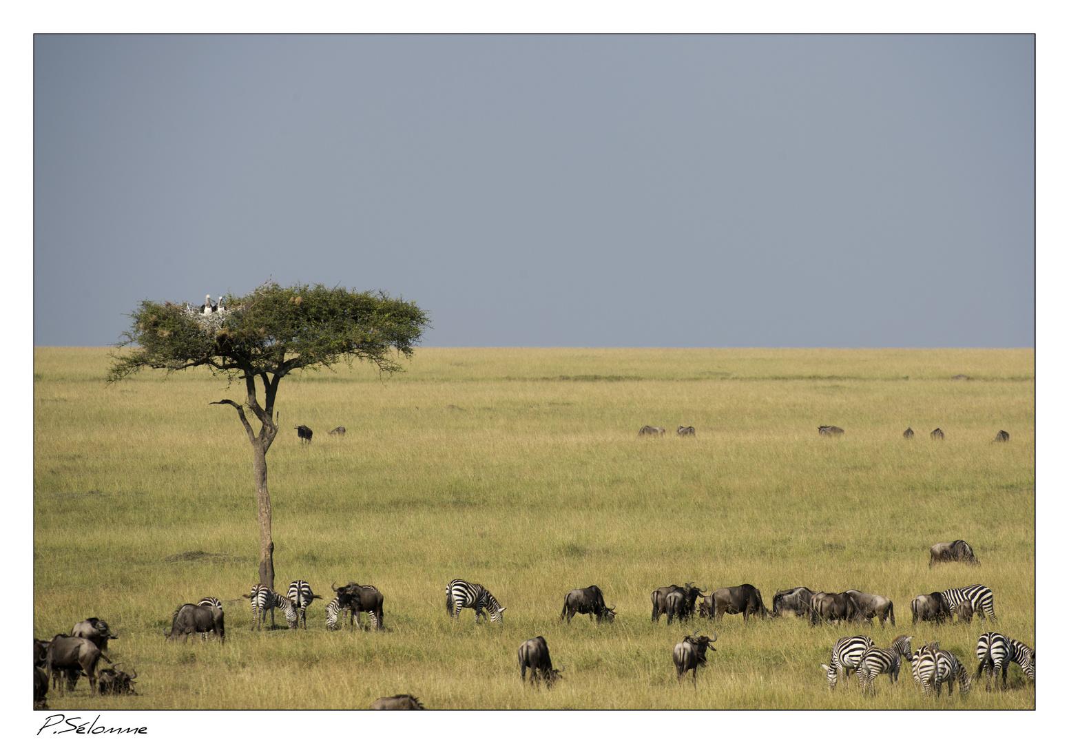 Le Massaî Mara