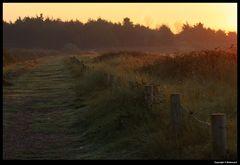 """"""" Le matin sur la dune """""""