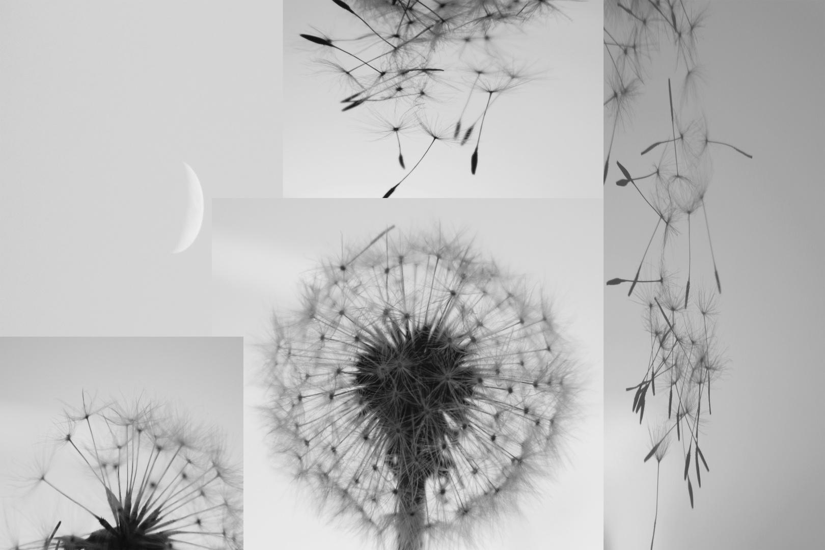 ..le mie fantasie..... sotto la luna.....