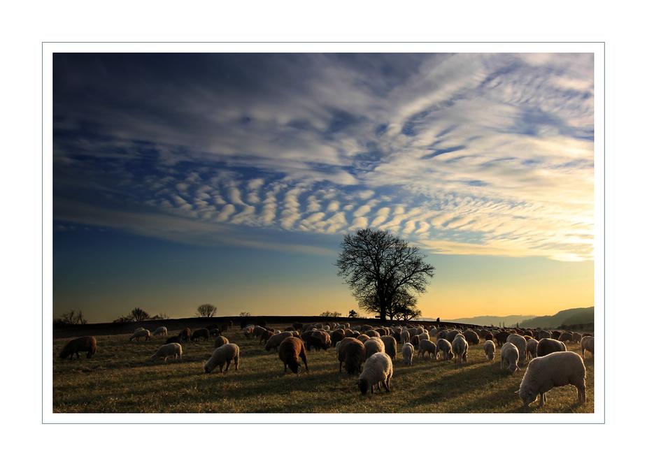 """Le """"mie"""" pecore..."""