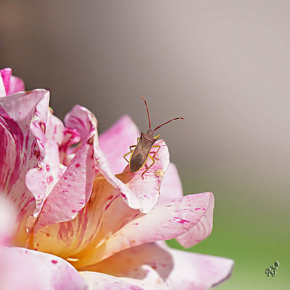 Le monde des insectes....