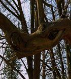 Le monstre des bois -