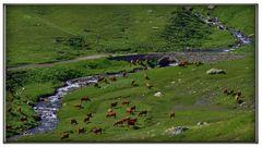 le mucche dei buoni formaggi alpini....