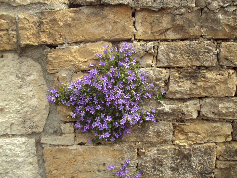 le mur fleuri