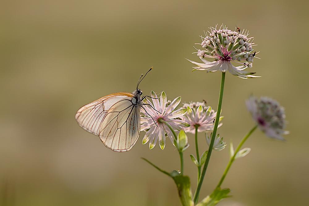 Le papillon et la fleur photo et image europe france - Image papillon et fleur ...