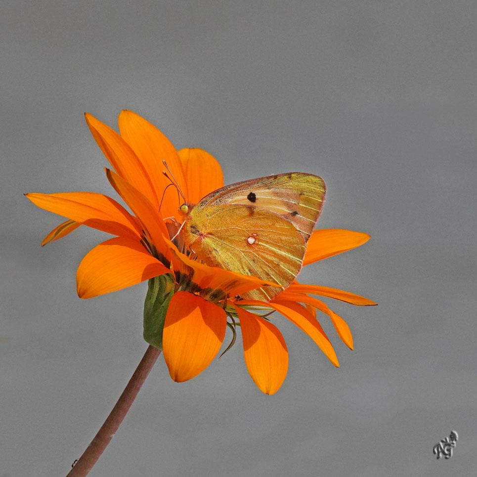 Le papillon et la petite fourmi ...