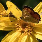Le papillon furtivement sur une fleur !